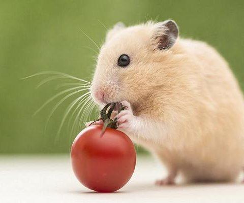 mo thay chuot 2 - Nằm mơ thấy chuột là điềm báo gì? Đánh con gì?