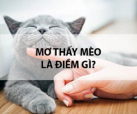 mo thay meo 1 - Nằm mơ thấy mèo là điểm tốt hay xấu? Đánh con gì?
